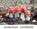 Four Red Mushrooms Among The...