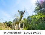 a white alpaca on a natural... | Shutterstock . vector #1142119193