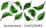 graphic detailed cartoon... | Shutterstock .eps vector #1142125493