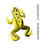 Colorful Yellow Frog On White...