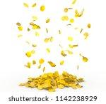 rose petals fall to the floor....   Shutterstock . vector #1142238929
