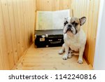 french bulldog travels on large ... | Shutterstock . vector #1142240816