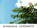 green fern palm leaves in front ... | Shutterstock . vector #1142266970