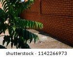 green fern palm leaves in front ... | Shutterstock . vector #1142266973