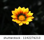 Singular Yellow Flower A Dark - Fine Art prints