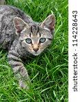 Tabby Cat Lying On Green Grass