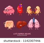 set of human internal organs... | Shutterstock .eps vector #1142307446