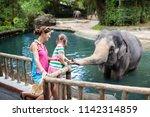 Family Feeding Elephant In Zo...