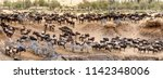 large herds of wildebeest and... | Shutterstock . vector #1142348006
