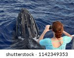 a surprise close up encounter... | Shutterstock . vector #1142349353