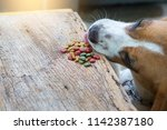 a dog is trying to eat food on... | Shutterstock . vector #1142387180