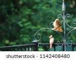 female northern cardinal... | Shutterstock . vector #1142408480
