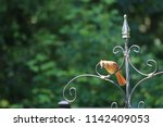 female northern cardinal... | Shutterstock . vector #1142409053