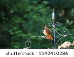 female northern cardinal... | Shutterstock . vector #1142410286