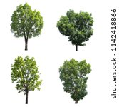 set of the trees isolated on a... | Shutterstock . vector #1142418866
