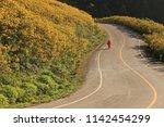 thungbuatong plant  doi mae u... | Shutterstock . vector #1142454299