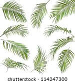 Collection Set Of Green Palm...