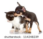 Stock photo the dog kisses a kitten isolated on a white background 114248239
