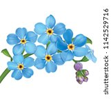 bunch of blue forget me not... | Shutterstock . vector #1142529716