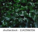 background green  nature    Shutterstock . vector #1142586536