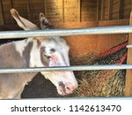 Donkey Eye And Ear. Picture Of...