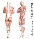 conceptual anatomy healthy... | Shutterstock . vector #1142628260