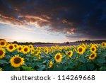 blue sky landscape of summer...   Shutterstock . vector #114269668