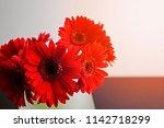 red gerbera daisy flowers in a... | Shutterstock . vector #1142718299