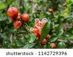 beautiful parc monceau  1778    ... | Shutterstock . vector #1142729396