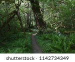 hoh river trail  olympic... | Shutterstock . vector #1142734349
