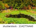 colorful australian autumn in... | Shutterstock . vector #1142776460