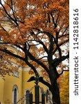 russia  st. petersburg  11 10... | Shutterstock . vector #1142818616