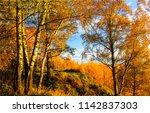 autumn birch tree forest... | Shutterstock . vector #1142837303