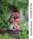Stock photo bouquet of pink roses on a rainy day in the summer garden 1142873756