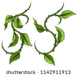 graphic cartoon detailed green... | Shutterstock .eps vector #1142911913