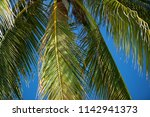 coconut palm on a background of ... | Shutterstock . vector #1142941373