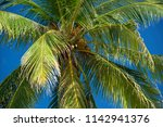 coconut palm on a background of ... | Shutterstock . vector #1142941376