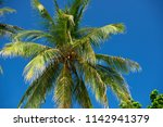 coconut palm on a background of ... | Shutterstock . vector #1142941379