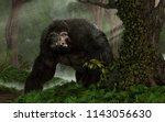 Stock photo a huge hairy gorilla like beast glares at you from a dense steamy jungle it gives you one mean 1143056630