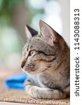 portrait of striped cat sitting ... | Shutterstock . vector #1143088313