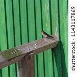 a dainty delightful  little... | Shutterstock . vector #1143117869