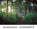 walking trail in new zealand... | Shutterstock . vector #1143166073