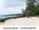 uprooted trees at wandoor beach ... | Shutterstock . vector #1143166076