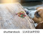 the dog looks at the food... | Shutterstock . vector #1143169550