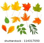 set of colorful autumn leaves.... | Shutterstock .eps vector #114317050