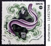 Small photo of USSR- CIRCA 1975: A stamp printed in Russia shows Chrysiptera, circa 1975