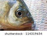 macro shot of  fish head....   Shutterstock . vector #114319654