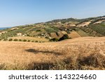 panoramic view of olive groves... | Shutterstock . vector #1143224660