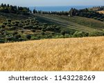 panoramic view of olive groves... | Shutterstock . vector #1143228269
