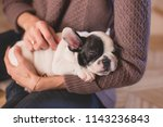 Stock photo cute puppy lying in young woman hands 1143236843